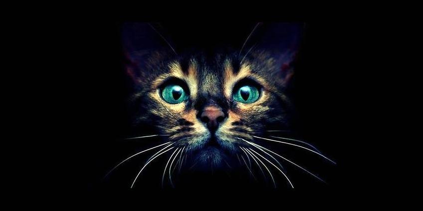 01_Cat.jpg