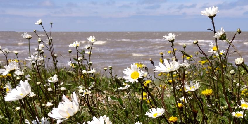 Sand-flowers.jpg