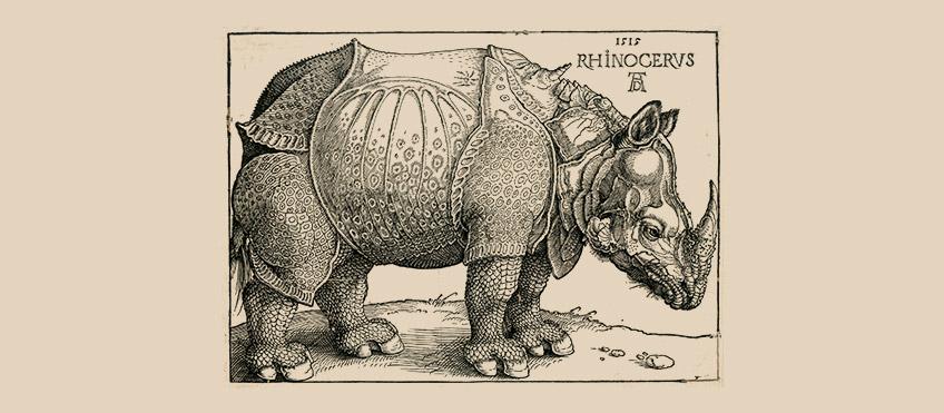 rinoceronte-800.jpg