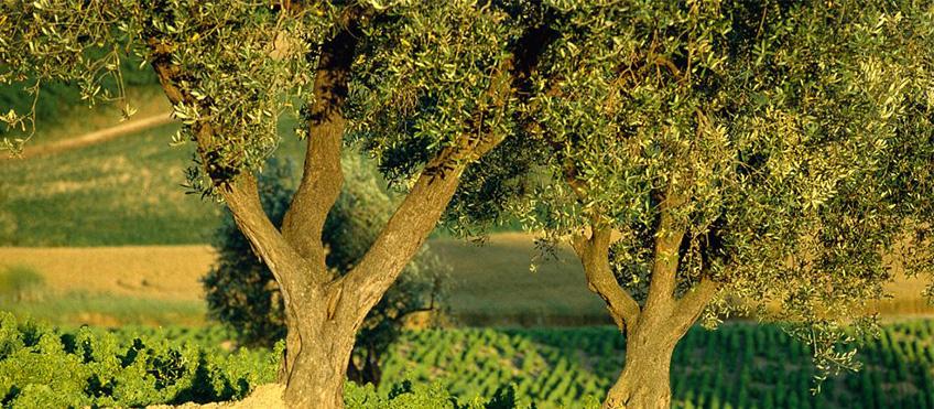 Dall'archivio fotografico dell'Assessorato al Turismo della Provincia di Rimini - autore: T. Mosconi