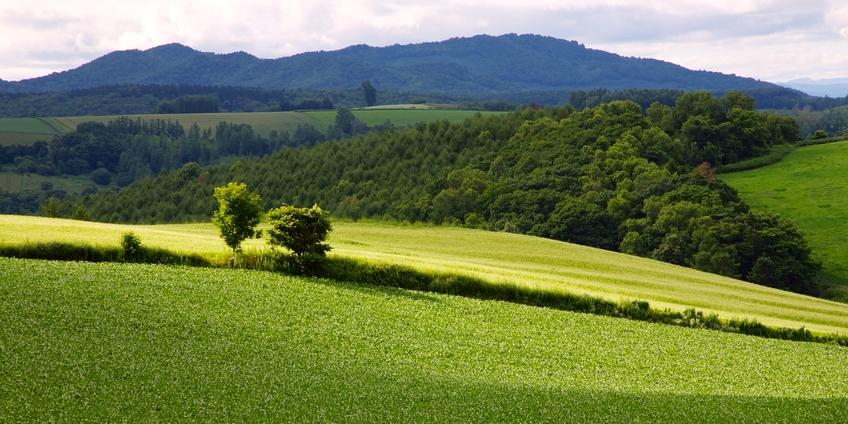 Paesaggio.jpg